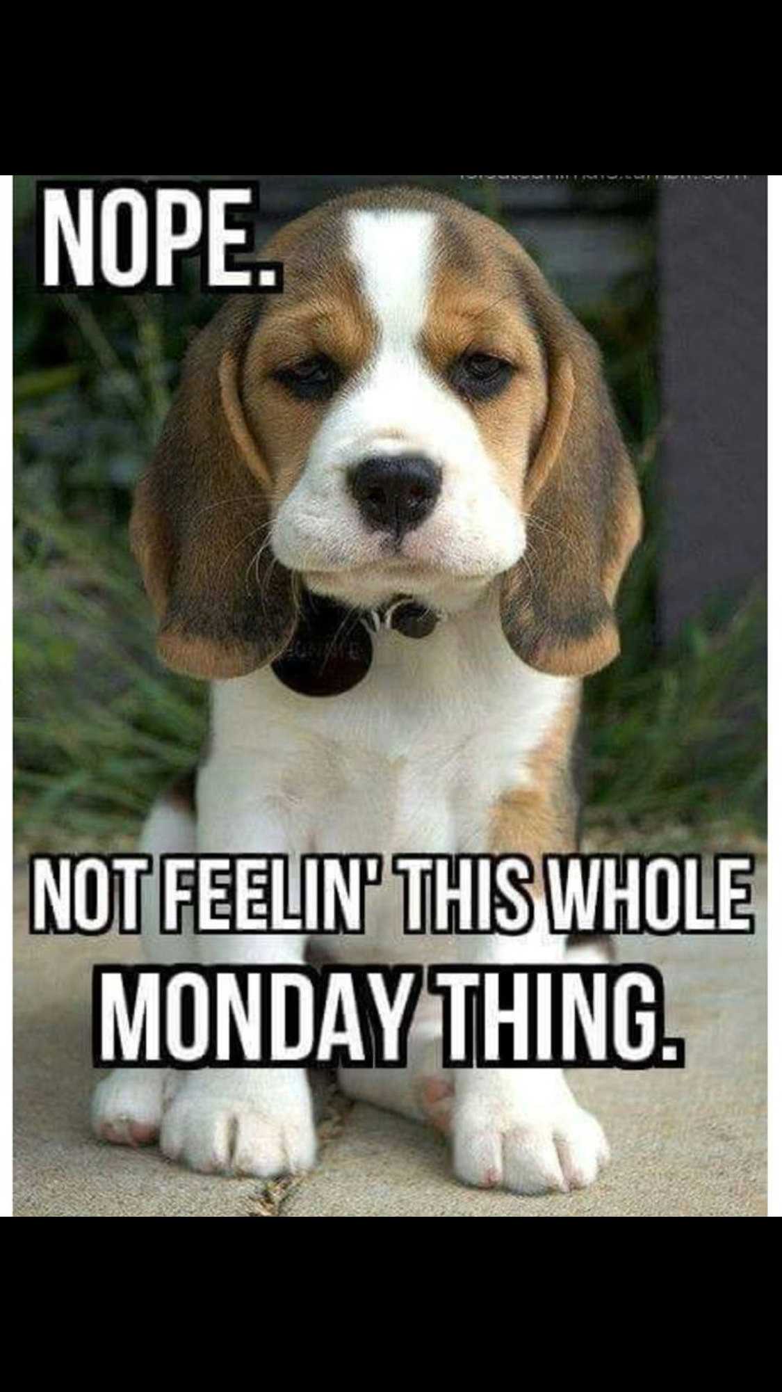 Top 16 Memes About Mondays That Are Just So Relatable