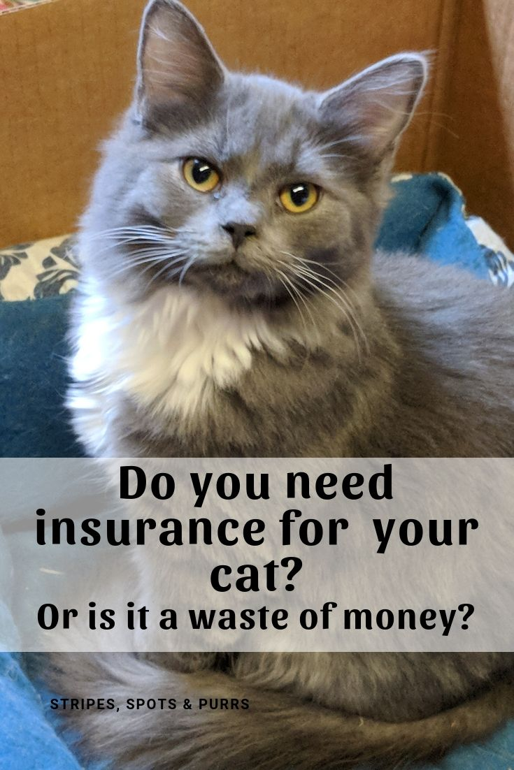 Is health insurance for cats a waste of money cat