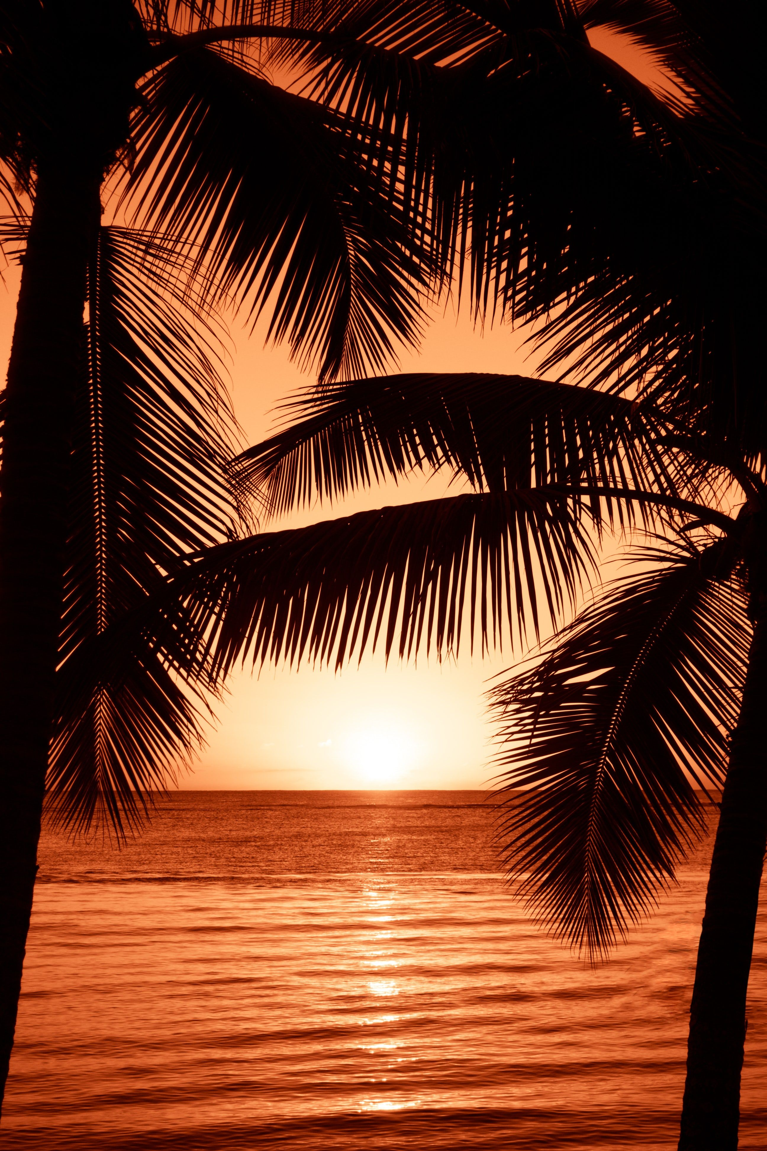 Silhouette Photography Of Two Coconut Trees Near Body Water During Golden Hour Richard