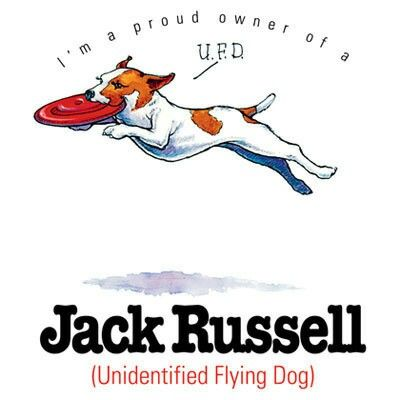 Pin By Finn Jacobson On Jacks Jack Russell Jack Russell Terrier