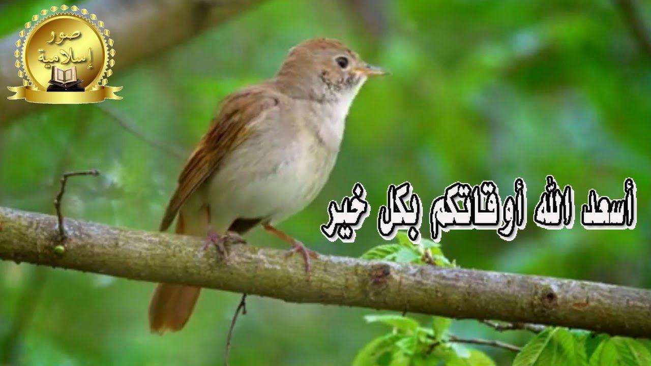 أسعد الله أوقاتكم بكل خير ومحبة وجعل الله مساءكم وصباحكم مساء وصباح الط Nice To Meet Nightingale Instagram
