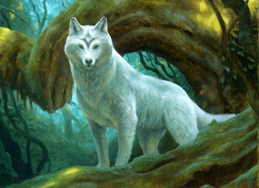 Sacred Wolf Animals In Art Giclee Print Wolf Artwork