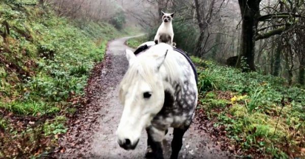 Meet A Cat Who Goes Exploring On The Back Of His Best Friend