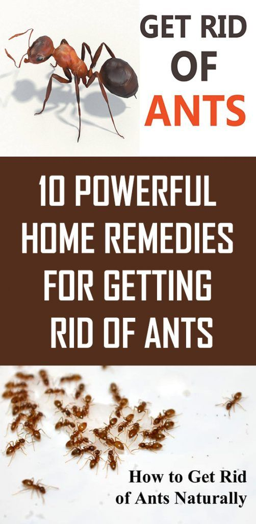 10 Powerful Home Remedies For Getting Rid Of Ants