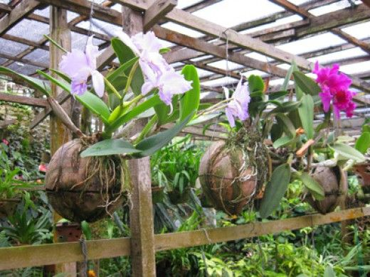Pin On Earth Gardening Permaculture Principles