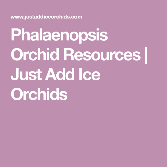Phalaenopsis Orchid Resources Just Add Ice Orchids Phalaenopsis Orchid Repotting Orchids Phalaenopsis Orchid Care