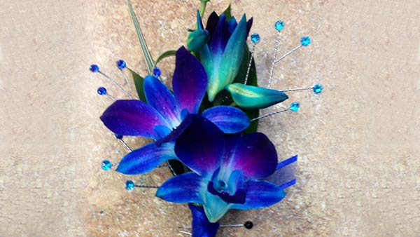 Meaning Of Blue Orchid Flower In 2020 Orchid Meaning Blue Orchid Flower Orchids