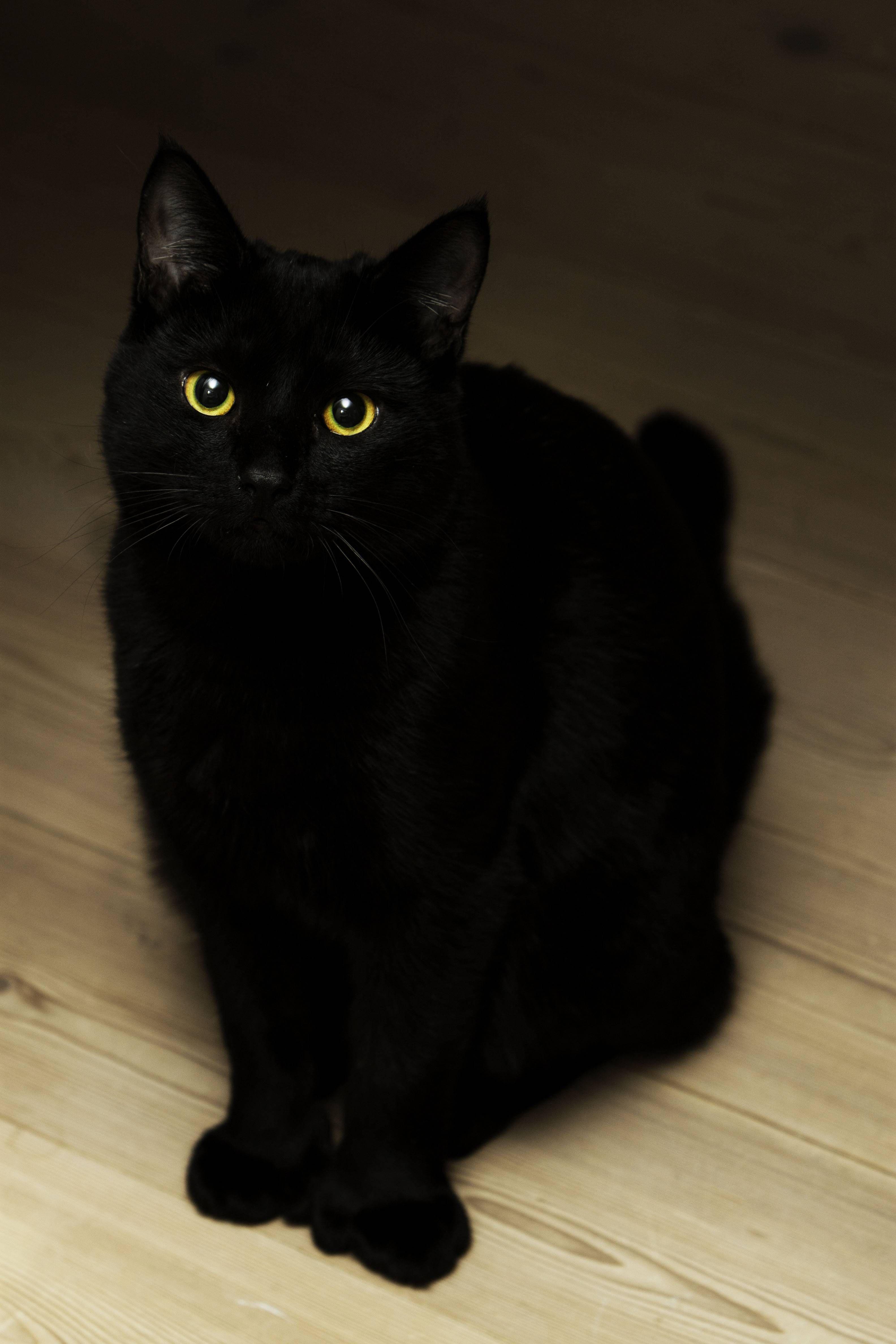 My friends black mitten cat Cats, Cat love, Pretty cats