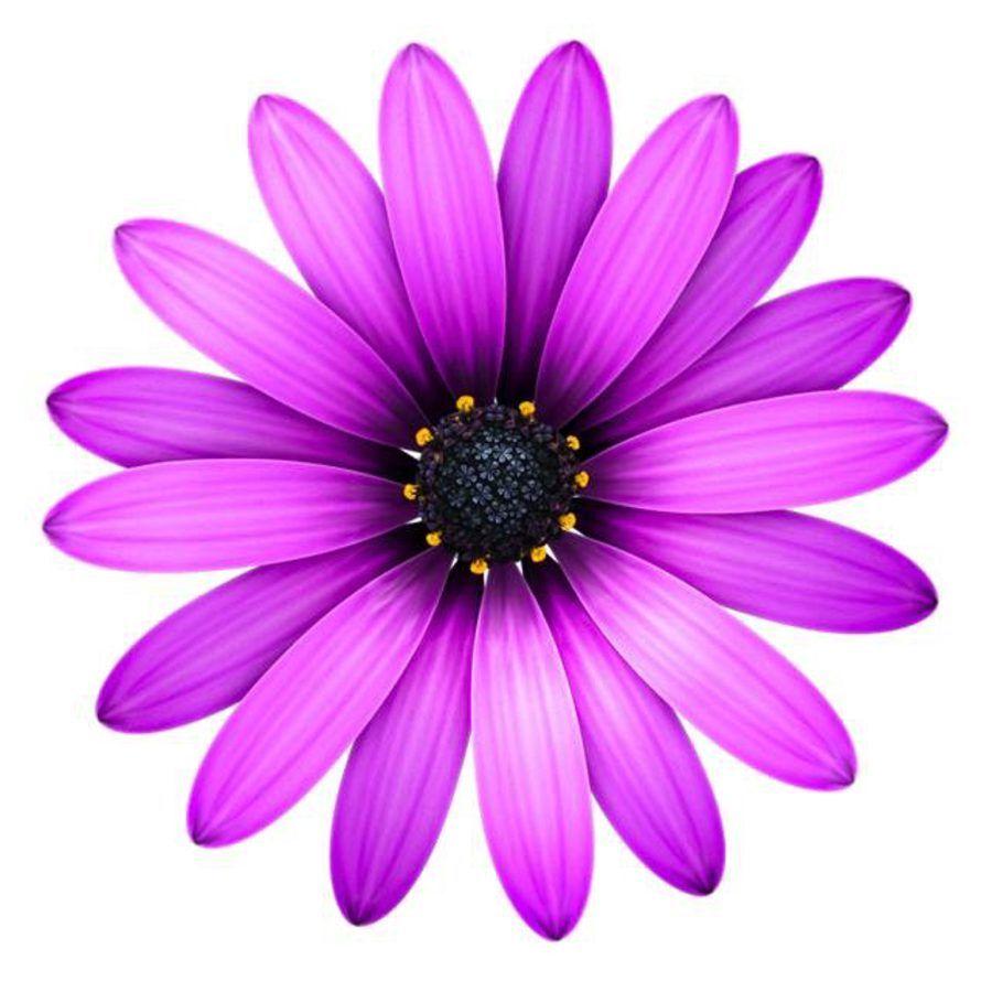 Astronomiczna Wiosna Ozdoby Wiosenne Kwiaty 2 Marzec Ozdoby Swieta I Pory Roku Wiosna Flower Text Text Editor Apple Design