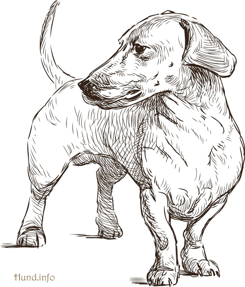 Ausmalbilder Mit Hunden Hunde Ausmalbilder Hunde Hund Zeichnungen Hundekunst