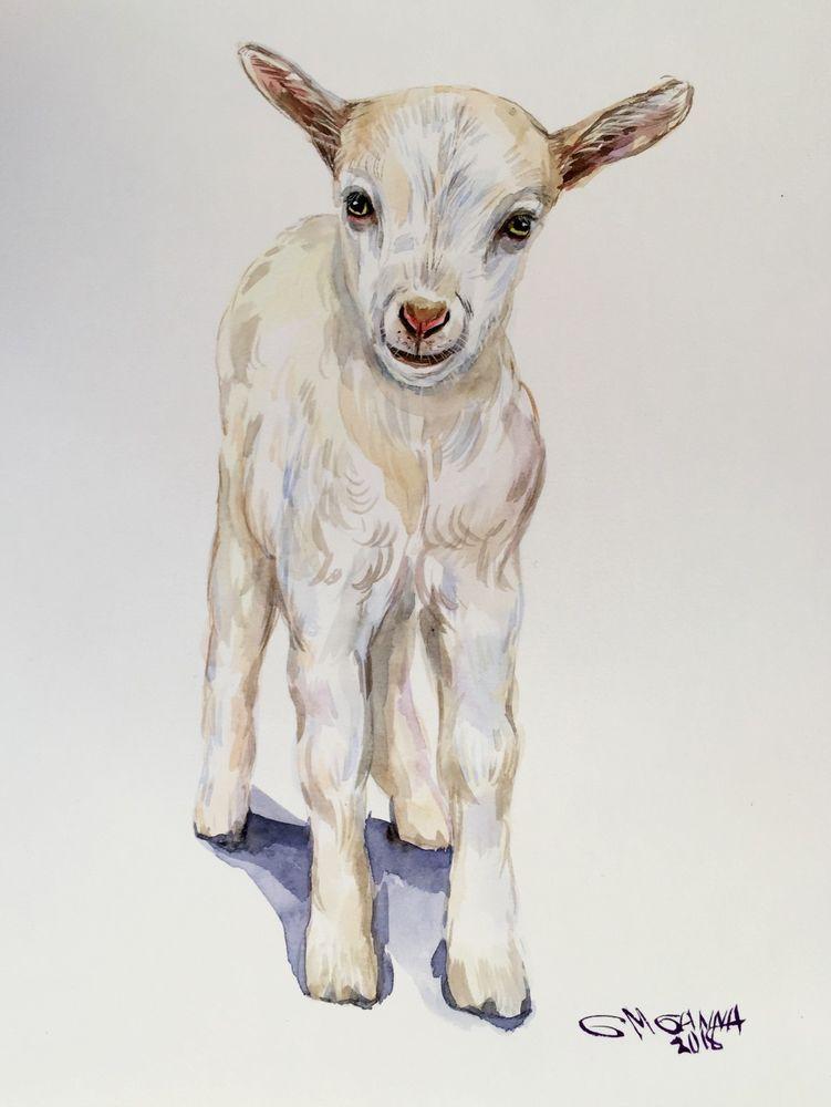 Cute Baby Goat Portrait Goatling Farm Animal Art