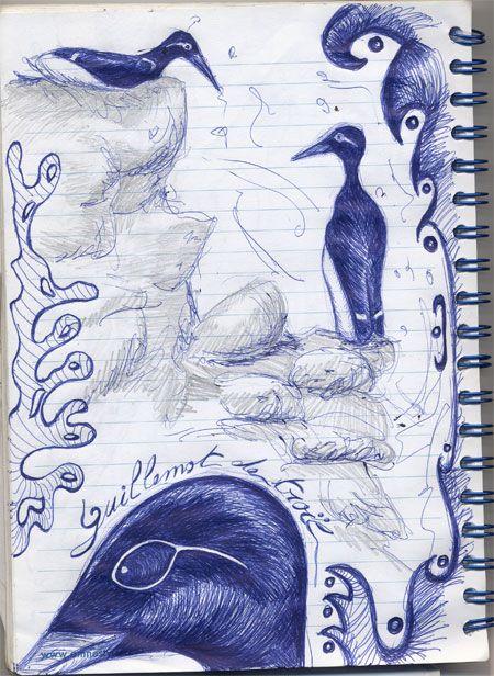 Oiseau Guillemot De Troil Carnet De Dessin Oiseaux Dessin