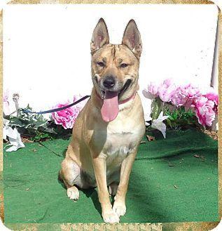 Marietta Ga German Shepherd Dog Mix Meet Nalah A Dog For Adoption Dogs Shepherd Dog Mix German Shepherd Dogs