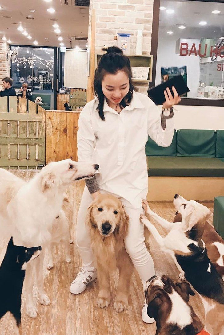 If Heaven Is A Place On Earth It S This Amazing Dog Cafe In Seoul Dog Cafe Cat Cafe Dog Friends