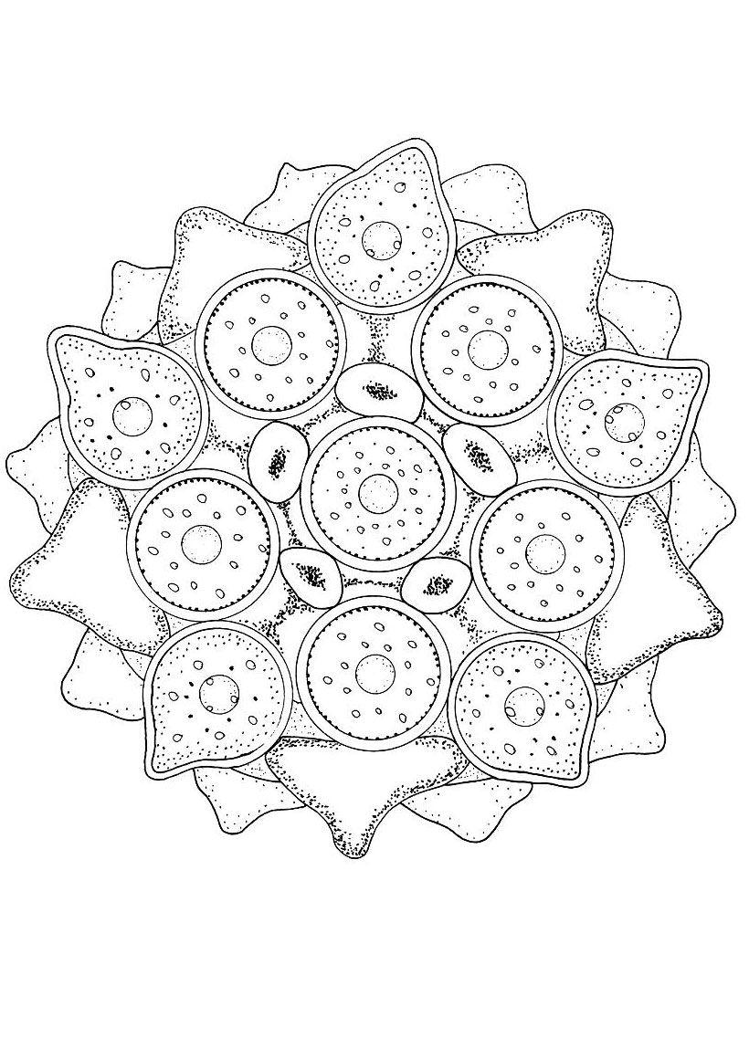 MANDALAS D'ANIMAUX à colorier   Coloriage de l'algue verte ...