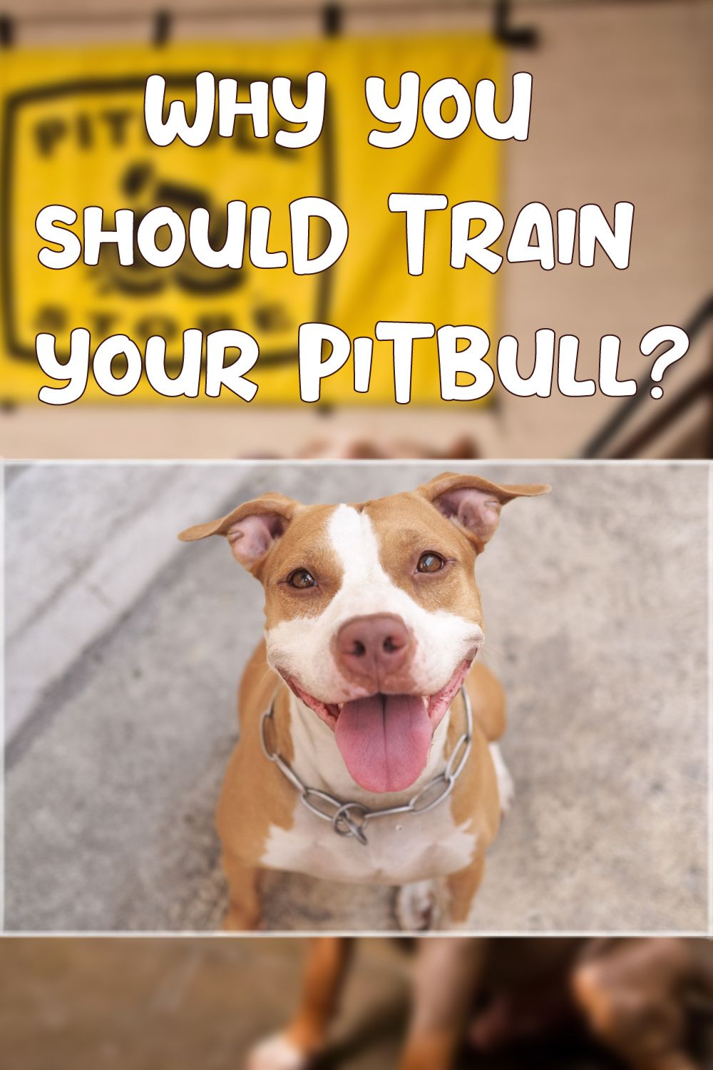 How To Train Pitbull To Attack On Command In 2020 Dog Training