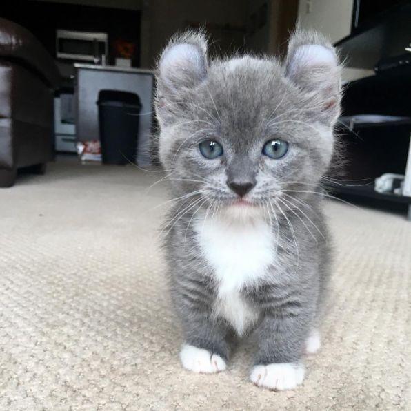 Mignonne minuscule chatte