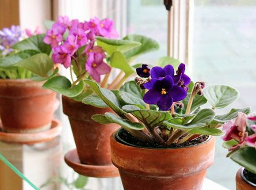 Домашние цветы размножение в домашних условиях 77