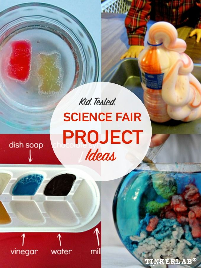 cheap science fair projects These 5th grade science projects are great for whole-class experimentation or as  a science fair project go ahead and give them a try.