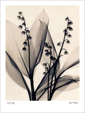 judith-mcmillan-lily-of-the-valley_i-G-17-1733-GVE3D00Z