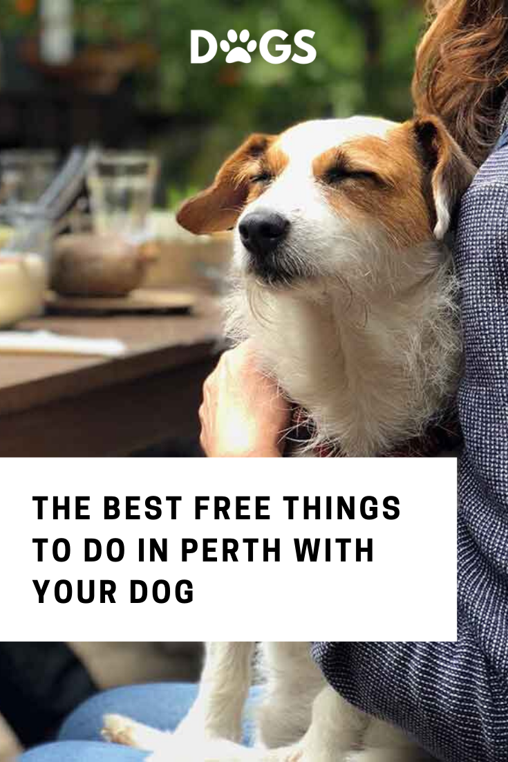 Your Favourite Dog Friendly Cafes In Perth In 2020 Dog Friends Dogs Friendly