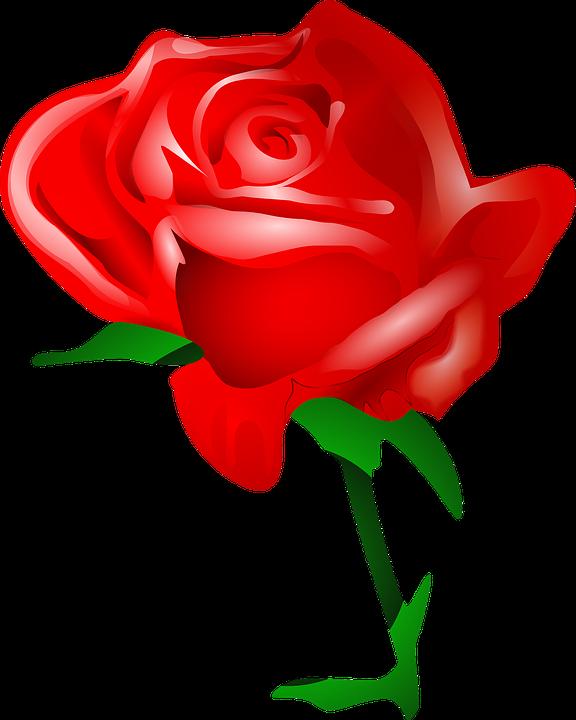 free image on pixabay rose flower love romantic rose nursery rh pinterest com free rose clipart borders free rose clipart black and white