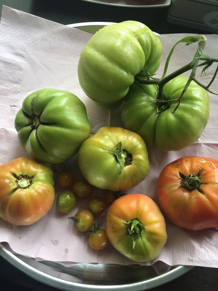 Garten Tomaten (Bio) #tomatenpflanzen