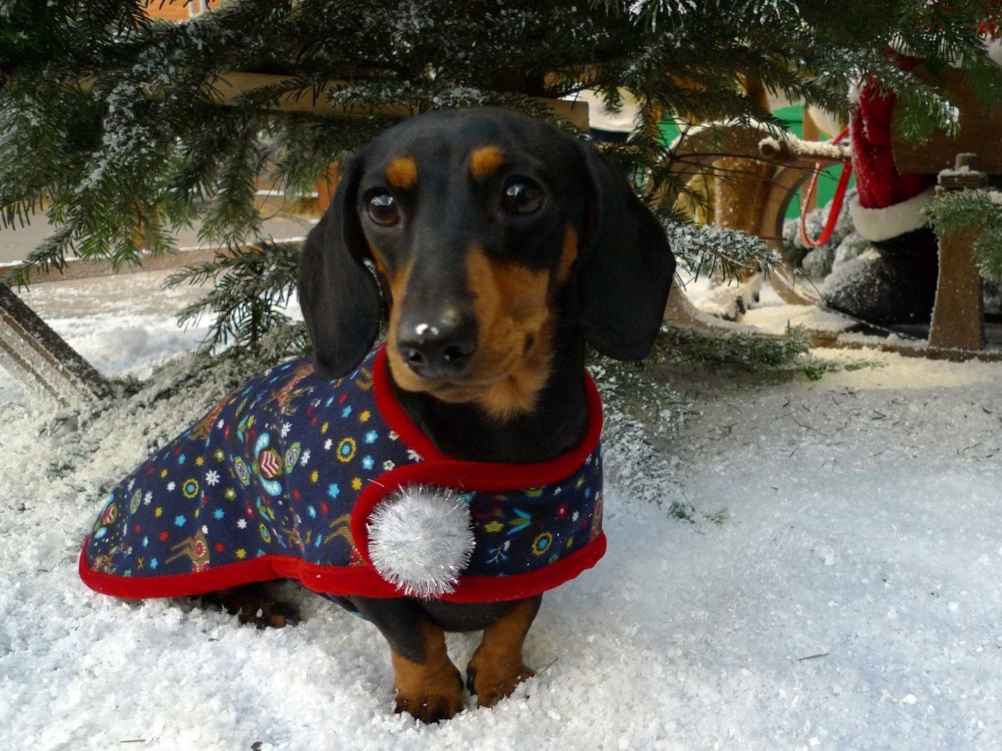 dog christmas dress uk