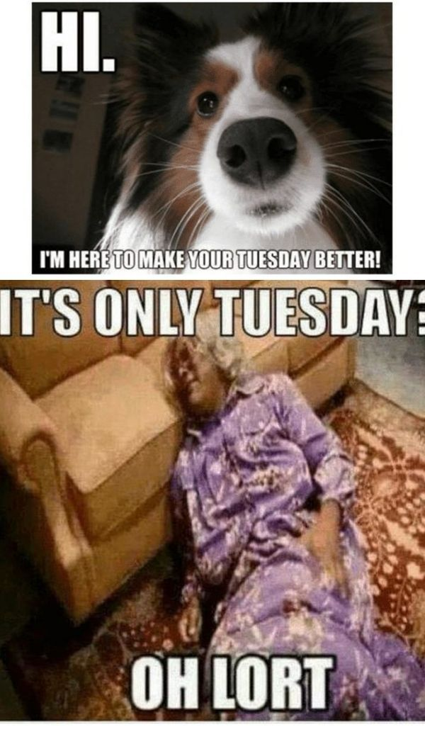 101 Tuesday Memes Good Morning Heres To A Great Tuesday And A Very Fun Day Tuesday Quotes Funny Tuesday Quotes Morning Workout Quotes