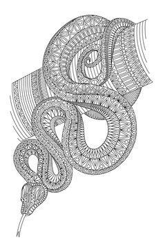 Pin On Snake
