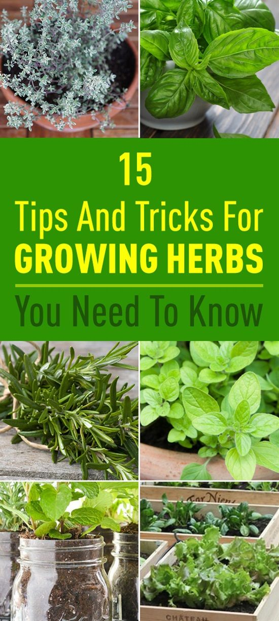 15 Tips And Tricks For Growing Herbs You Need To Know #herbsgarden