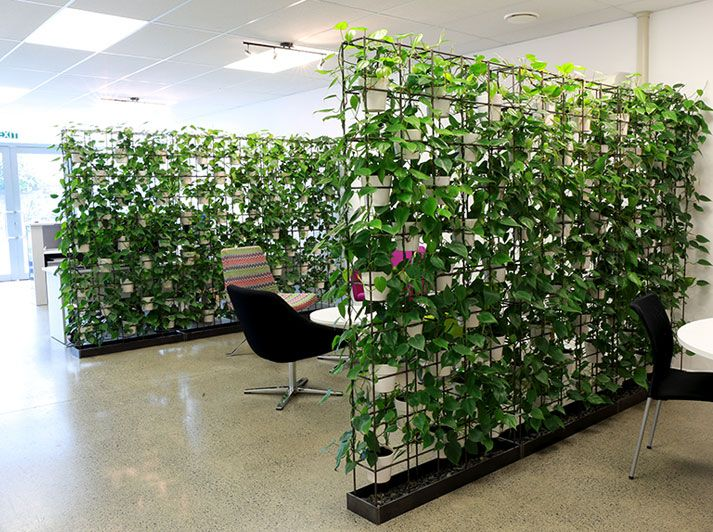 Vertical Plant Walls Offer The Added Advantage Of Being