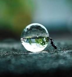 Ant with water droplet.