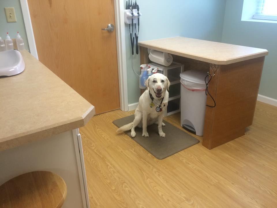Dog Friendly Room Lab Pet Clinic Animal Hospital Veterinary Hospital