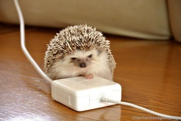 充電器ハリネズミ