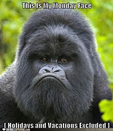 This is my monday face #animalcaptions