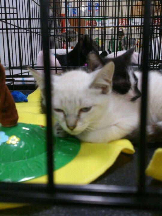 Cute cat from petsmart