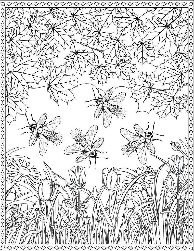 Firefly Coloring Page Coloring Pages Color Firefly