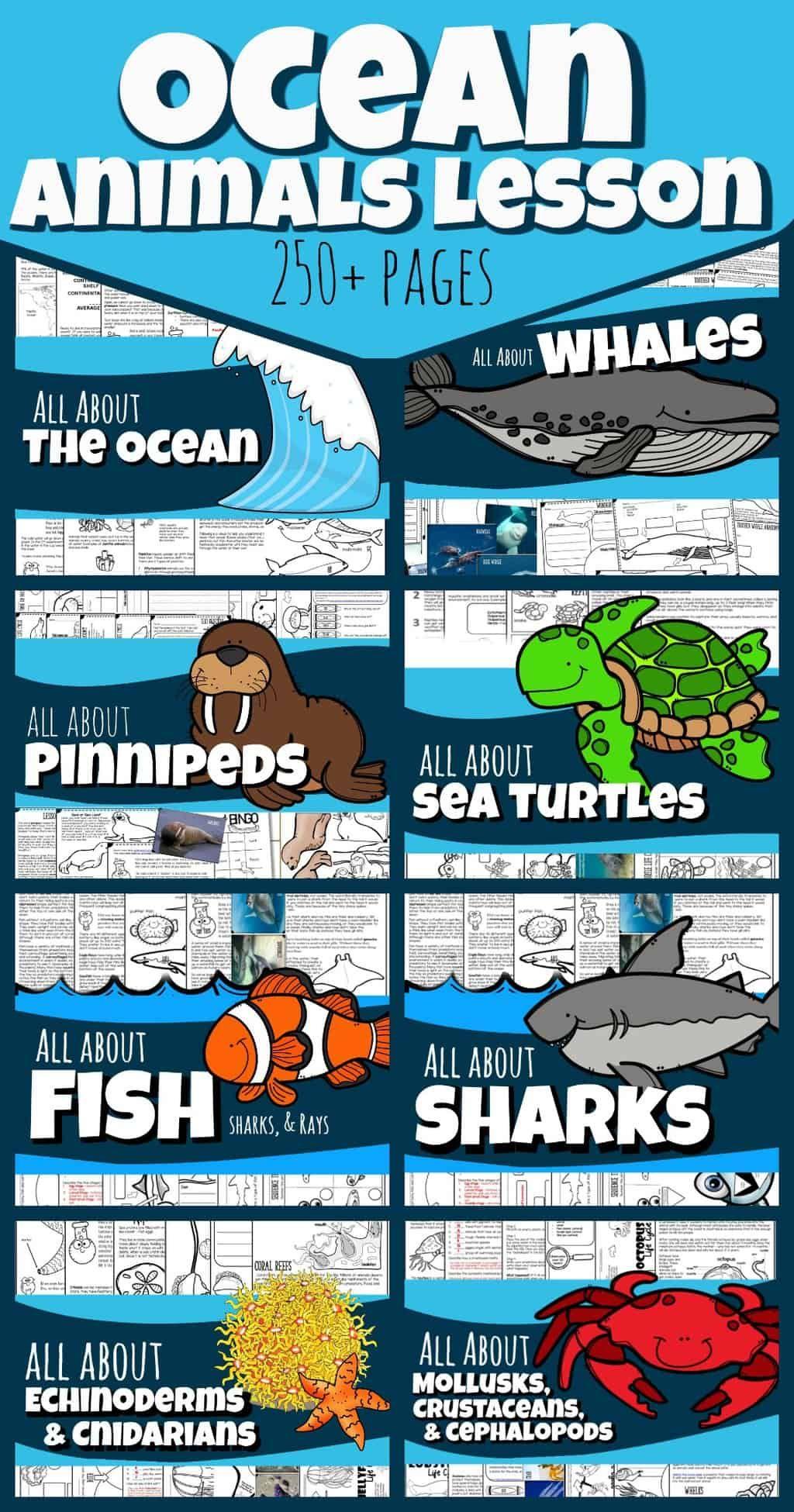 Pin On Ocean Activities For Kids
