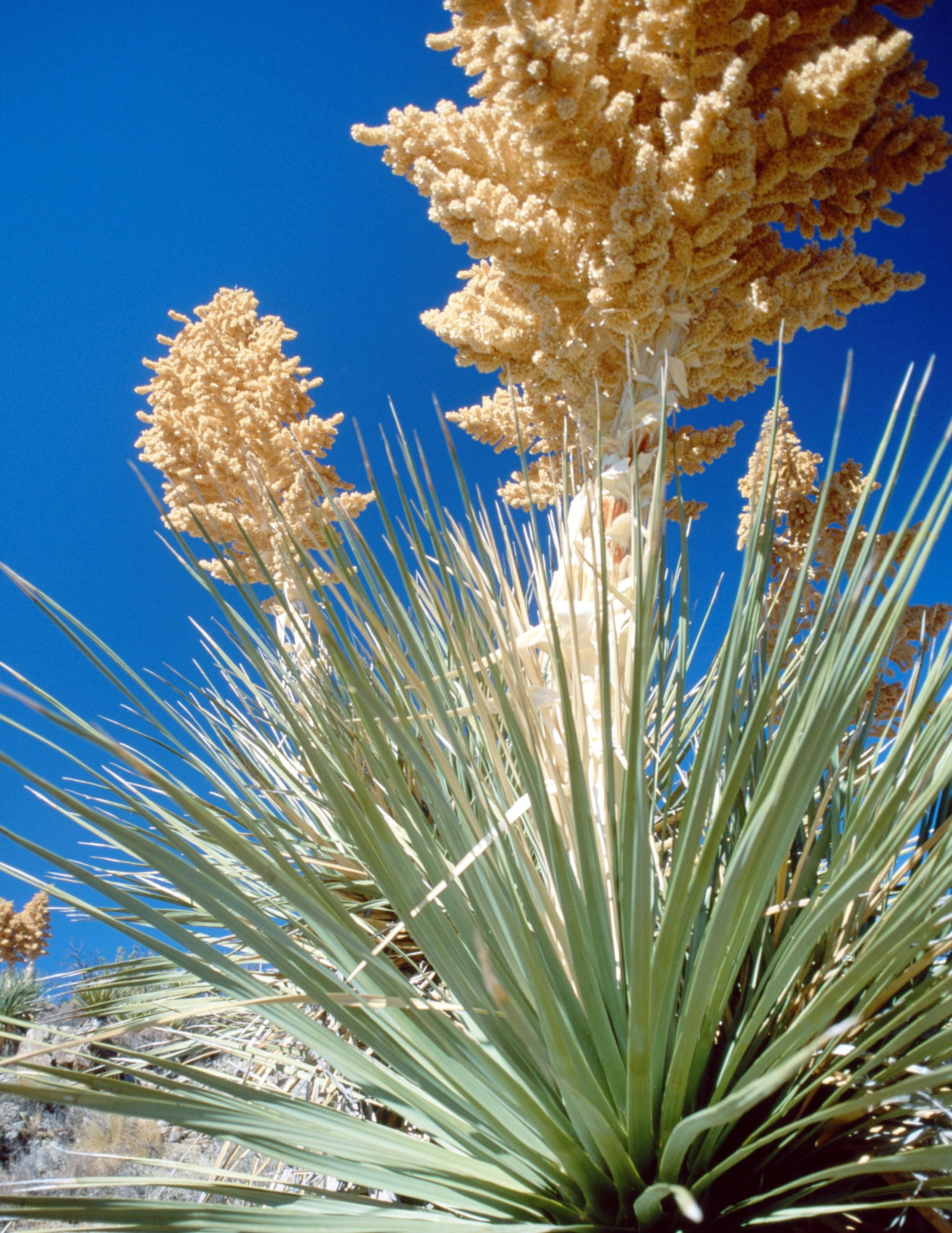wild edible plants in arizona from semi arid to desert arizona