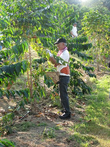 Equal Exchange Fair Trade Coffee Cooperativa Nor Andino Is An