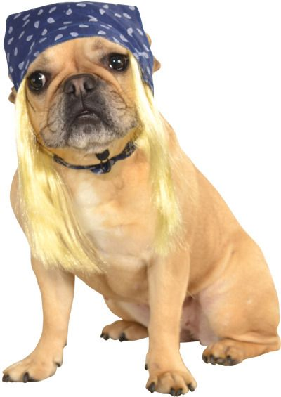Blue Pet Bandanna With Hair Bret Michaels Move Over This Is The