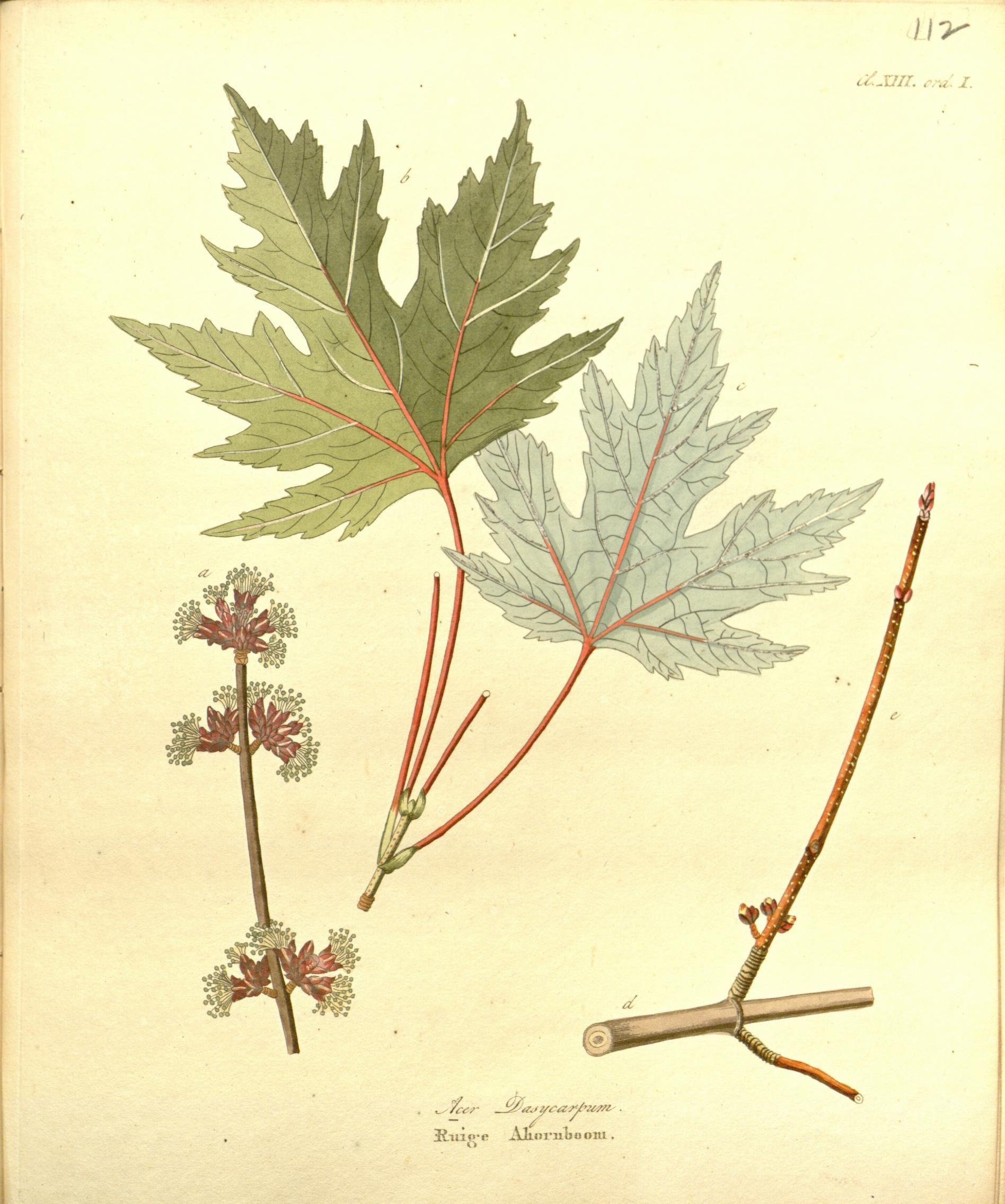 1 - Afbeeldingen der fraaiste, meest uitheemsche boomen en heesters : - Biodiversity Heritage Library