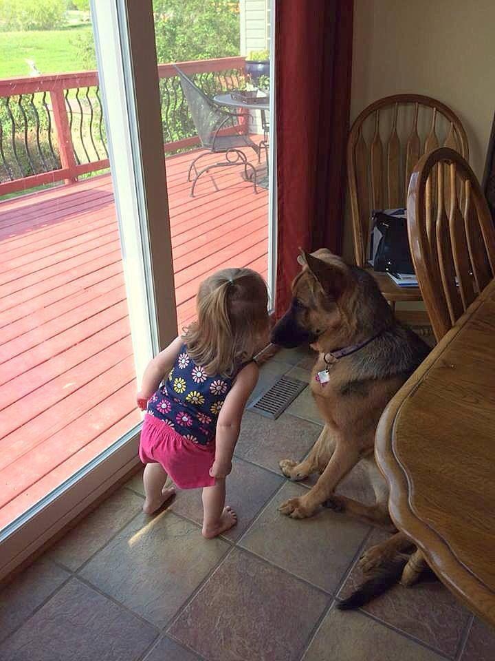 Wanna Know A Secret German Shepherd Dogs Shepherd Dog