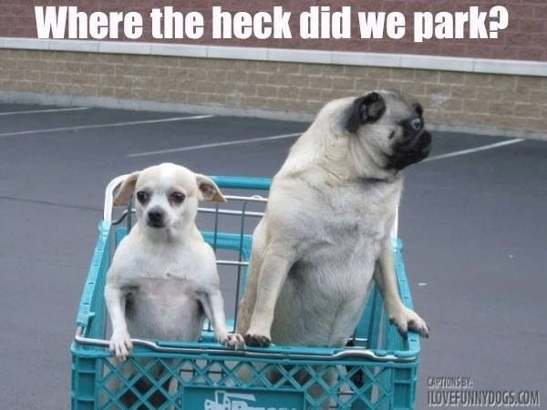 How We Feel Every Time We Go To The Grocery Store Pugs Funny