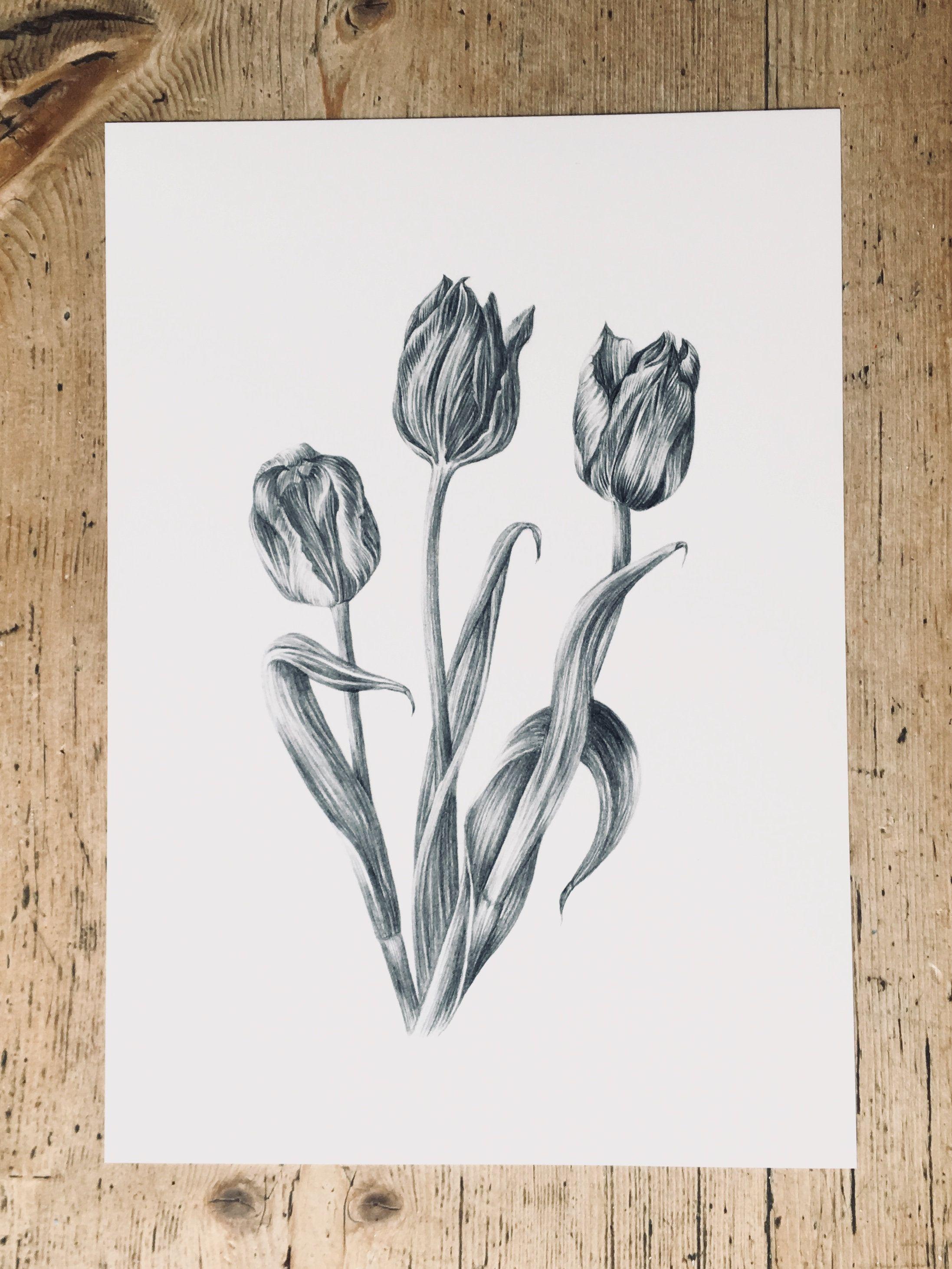 Tulips Pencil Drawing Art Print Botanical Flowers Drawing Print