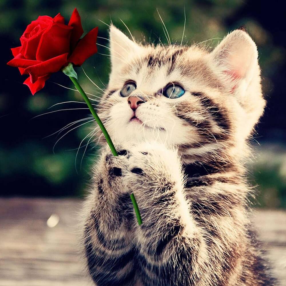 Diamond Painting Cat Rose Kittens Cutest Kitten Pictures Cute Animals