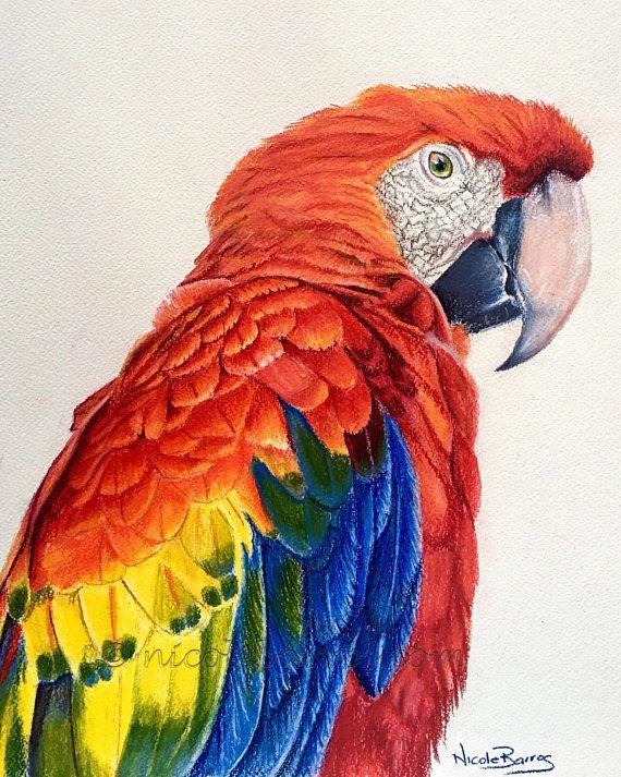 Macaw Print Coloured Pencil Art Bird Parrot Wildlife Etsy Parrots Art Color Pencil Art Prismacolor Art