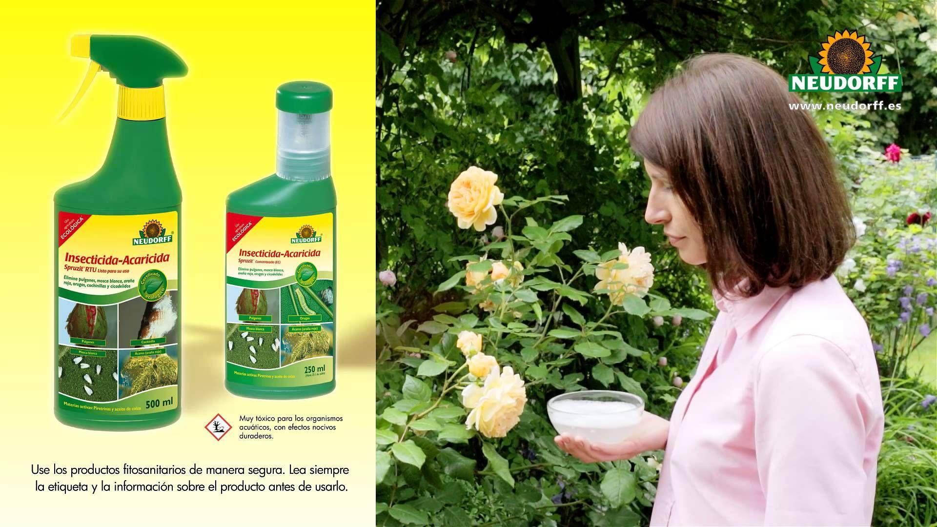 Descubre algunos trucos para ahuyentar a los insectos que - Plantas ahuyenta insectos ...