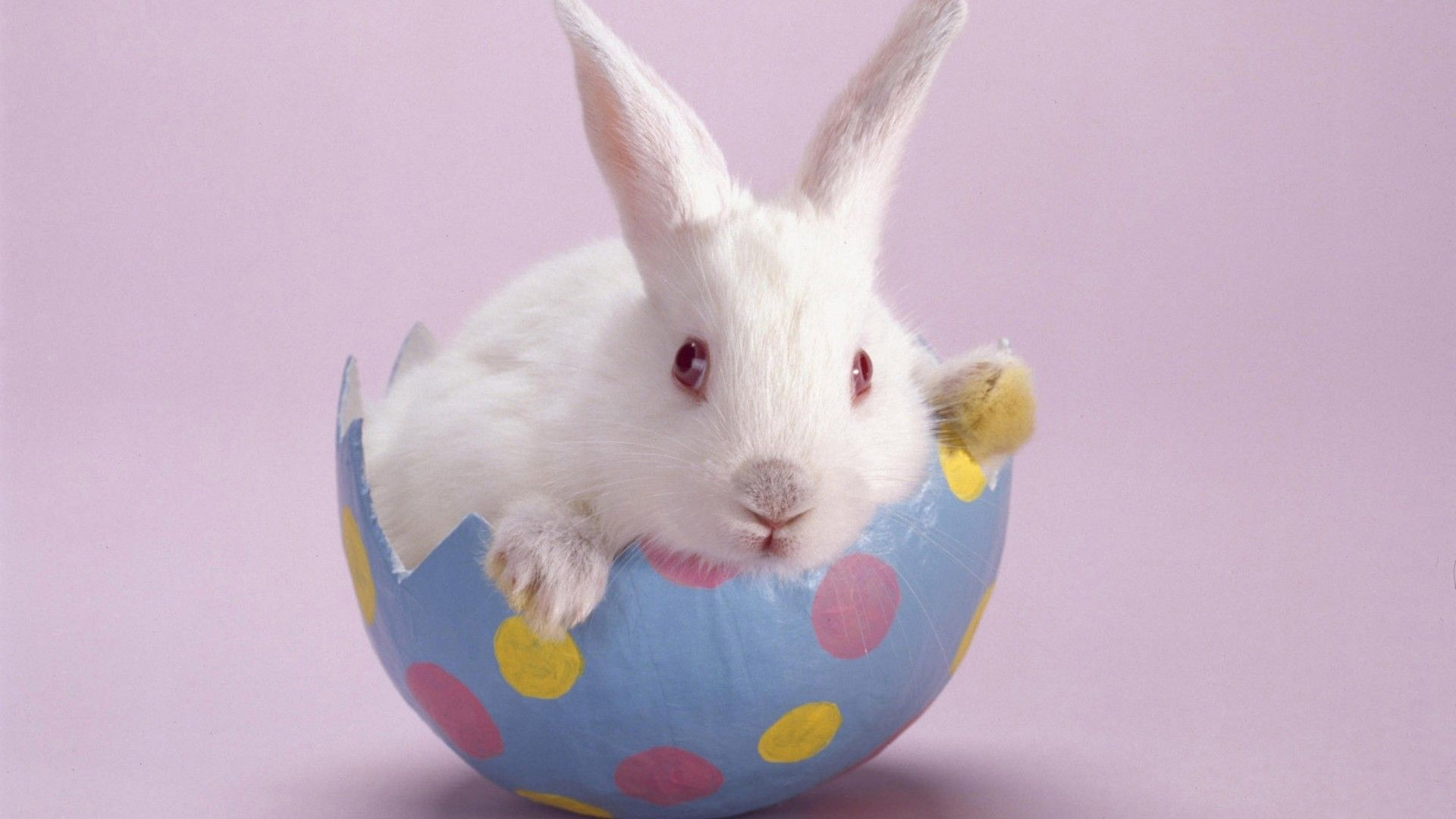 1000+ images about The Easter Bunny on Pinterest | Graphics, Eggs ...